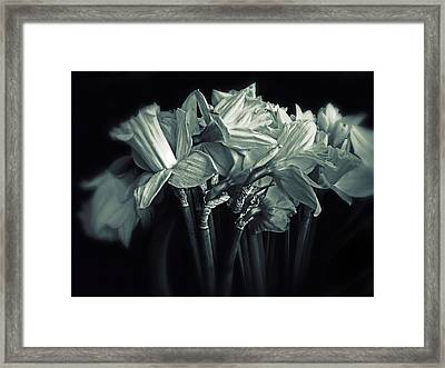 Daffodil Duotone Framed Print by Jessica Jenney
