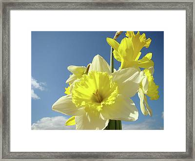 Daffodil Flowers Artwork Floral Photography Spring Flower Art Prints Framed Print by Baslee Troutman