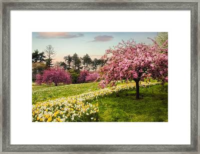 Daffodil Heaven Framed Print by Jessica Jenney