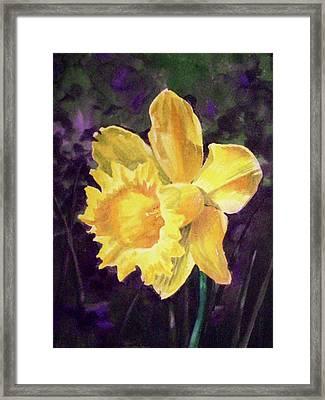 Daffodil Framed Print by Irina Sztukowski