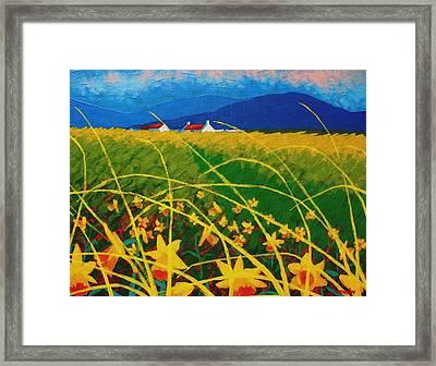 Daffodil Landscape Framed Print by John  Nolan