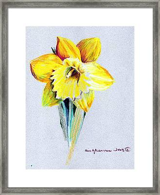 Daffodil Framed Print by Mindy Newman