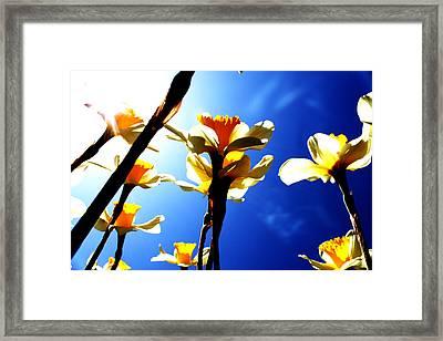 Daffodil Framed Print by Nathan Grisham