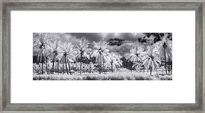 Daffodil Palms Framed Print by Sean Davey