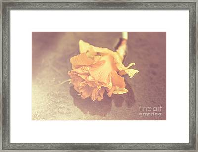 Daffodil Reflections  Framed Print by Jorgo Photography - Wall Art Gallery