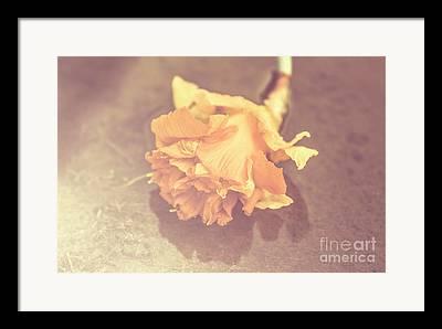 Flower Scenes Framed Prints