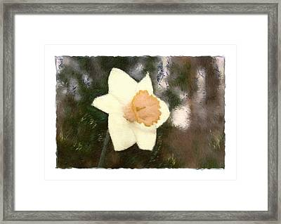 Daffodil Framed Print by Sandy Belk