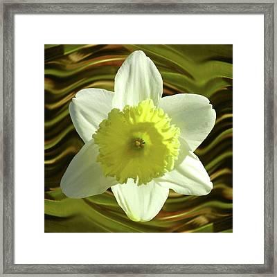 Daffodil Swirl Framed Print