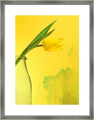 Daffodil Yellow Framed Print by Mark Rogan