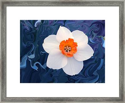 Daffodill In Blue Framed Print by Jim  Darnall