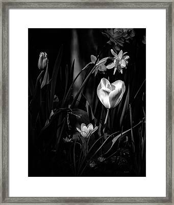 Daffodils And Tulips Framed Print by Bob Orsillo