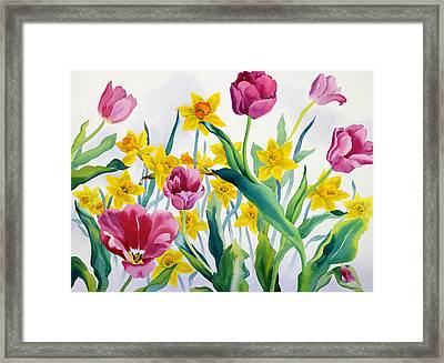 Daffodils And Tulips Framed Print by Christopher Ryland