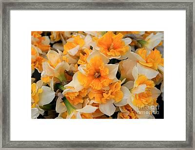 Daffodils Carpet Framed Print by Valia Bradshaw