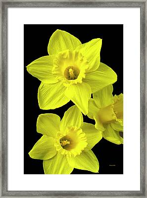 Framed Print featuring the photograph Daffodils by Christina Rollo