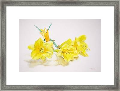 Daffodils Framed Print by Christopher Reid