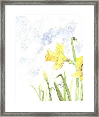 Daffodils Framed Print by Denise   Hoff
