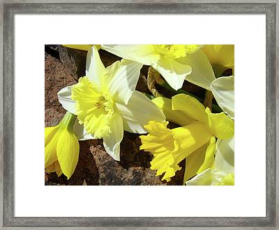Daffodils Flower Bouquet Rustic Rock Art Daffodil Flowers Artwork Spring Floral Art Framed Print by Baslee Troutman