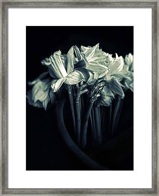 Daffodils Framed Print by Jessica Jenney