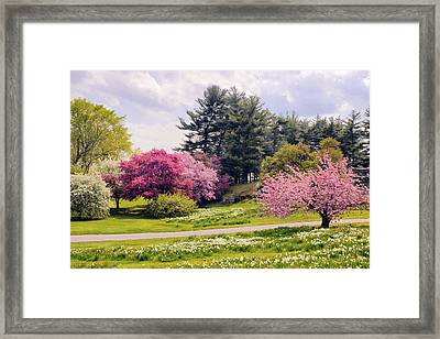 Daffodils On A Hill Framed Print by Jessica Jenney