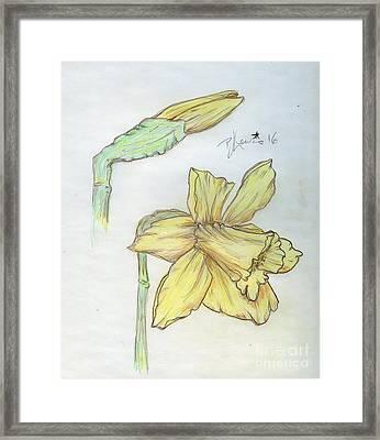 Daffodils Framed Print by P J Lewis