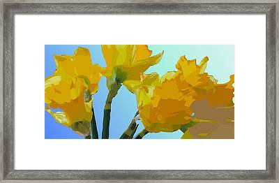 Daffodils Framed Print by Robert Bissett
