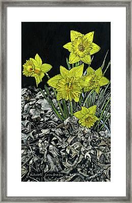 Daffodils Framed Print by Robert Goudreau