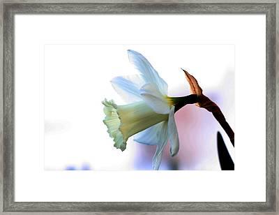 Daffy Framed Print