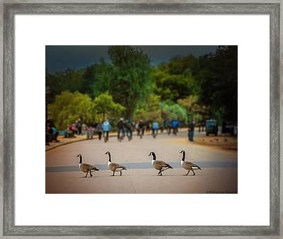 Daffy Road Framed Print