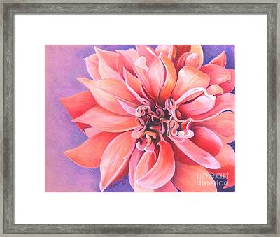 Framed Print featuring the drawing Dahlia 2 by Phyllis Howard