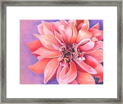 Dahlia 2 Framed Print