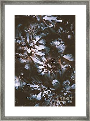Dahlia Abstraction Framed Print by Jorgo Photography - Wall Art Gallery
