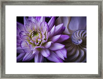 Dahlia And Nautilus Shell Framed Print by Garry Gay