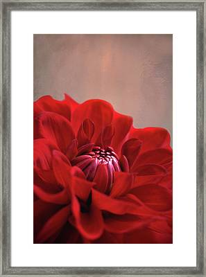 Dahlia Dalliance  Framed Print