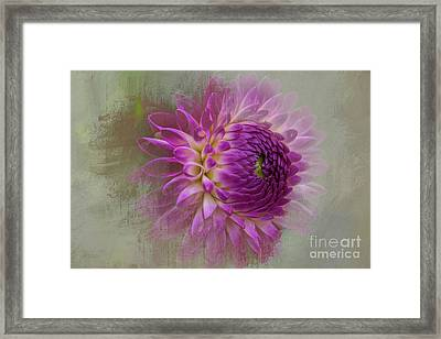 Dahlia Dream Framed Print