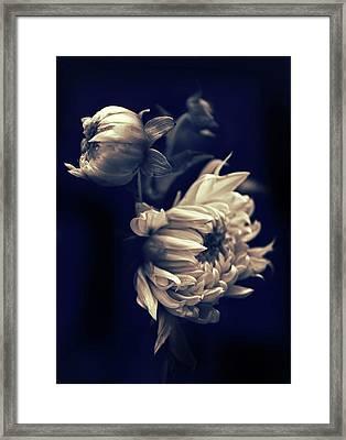 Dahlia Duet Framed Print
