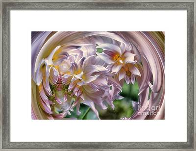Dahlia Ecstasy Framed Print by Mary Lou Chmura