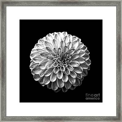 Dahlia  Flower Black And White Square Framed Print