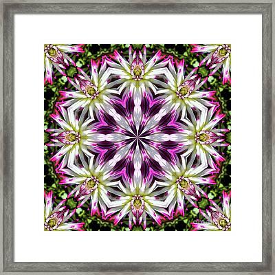 Dahlia Flower Circle Framed Print