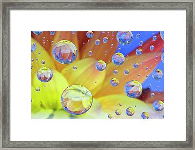 Dahlia Galaxy Two Framed Print