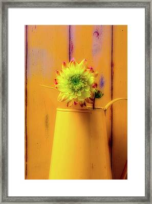 Dahlia In Yellow Pitcher Framed Print