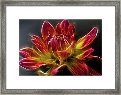 Dahlia Framed Print by Joann Copeland-Paul