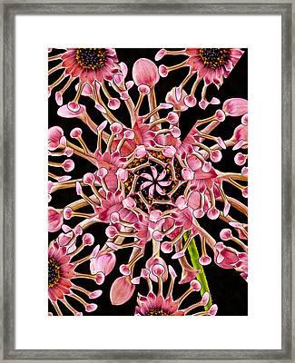 Dahlia Kaleidoscope By Jean Noren Framed Print by Jean Noren