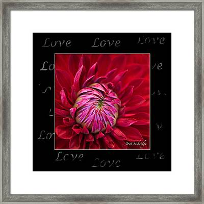 Dahlia Of Love Framed Print
