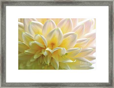 Dahlia Patterns By Kaye Menner Framed Print