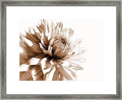 Dahlia Sepial Flower Framed Print by Jennie Marie Schell