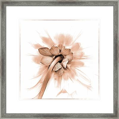 Framed Print featuring the photograph Dahlia Shyness by Julie Palencia