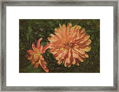 Dahlia Sketch Framed Print