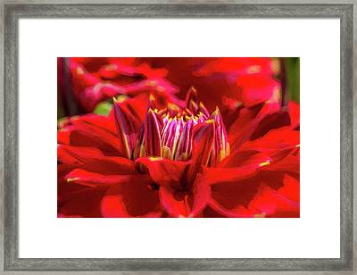 Dahlia Study 1 Painterly Framed Print