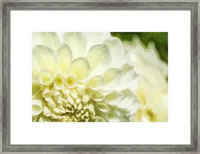 Dahlia Study 4 Painterly Framed Print by Scott Campbell
