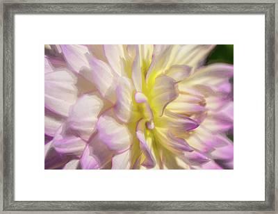 Dahlia Study 5 Painterly  Framed Print